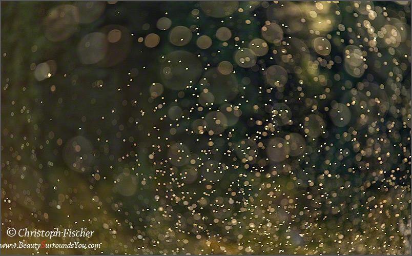 Kaleidoscope_Digimarc